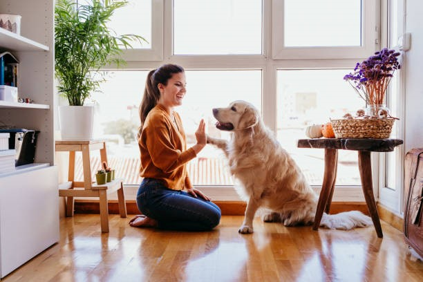 Best HVAC Maintenance Tips for Pet Owners